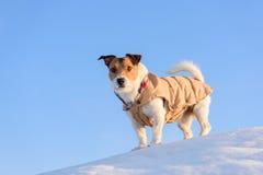 Hond die bij de winterbergen wandelen Stock Fotografie