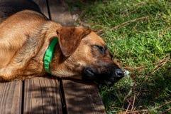 Hond die bij helder zonneschijn houten dek rusten royalty-vrije stock afbeelding