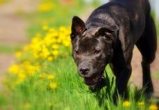 Hond die in boomgaard in zonlicht, kleur lopen Royalty-vrije Stock Foto's