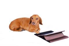 Hond die computer met behulp van royalty-vrije stock afbeeldingen