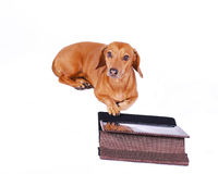 Hond die computer met behulp van royalty-vrije stock afbeelding