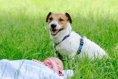 Hond die de baby van de slaapzuigeling op groen gras bewaken Stock Fotografie