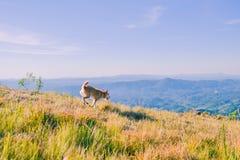 Hond die in de bergen wandelen Royalty-vrije Stock Afbeeldingen