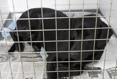 Hond die in de Kennels van de Dierenarts terugkrijgt Stock Foto's