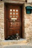 Hond die de meester wacht stock afbeeldingen