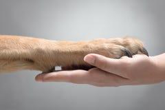 Hond die de Poot geven royalty-vrije stock afbeelding
