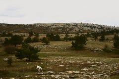 Hond die in de vallei lopen Stock Afbeeldingen
