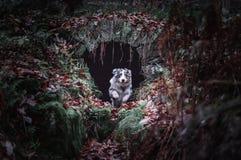 Hond die in de wildernis springen stock fotografie