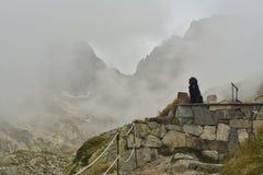 Hond die dichtbij een bergschuilplaats rusten Royalty-vrije Stock Foto