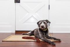Hond die door Deur op Gang wachten Stock Foto