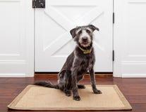 Hond die door Front Door wachten Stock Foto's