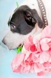 Hond die droevig kijkt Royalty-vrije Stock Fotografie
