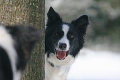 Hond die een andere hond bekijken stock afbeelding