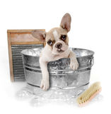 Hond die een Bad in een Waskom in Studio krijgt Stock Fotografie