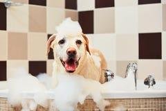 Hond die een bad neemt stock afbeelding