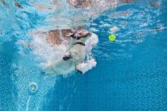Hond die een bal in zwembad springen terug te winnen Royalty-vrije Stock Fotografie