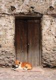 Hond die in een deuropening rust stock afbeeldingen