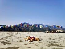 Hond die een dutje in het midden van de heuvels nemen stock afbeelding