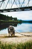 Hond die een geheel in het zand graven Royalty-vrije Stock Afbeelding