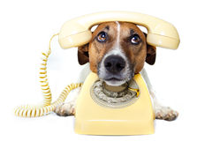 Hond die een gele telefoon met behulp van stock afbeelding