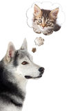 Hond die een kat veronderstelt Stock Foto