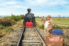 Hond die een oude locomotief tegenhoudt Stock Afbeelding
