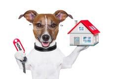 De hondeigenaar van het huis Royalty-vrije Stock Afbeeldingen