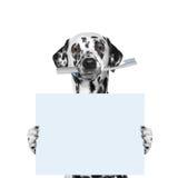Hond die een tandenborstel en een spatie houden stock fotografie