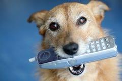 Hond die een telefoon in haar mond houdt Stock Fotografie