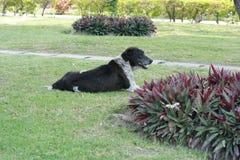 Hond die in een tuin rusten Stock Fotografie