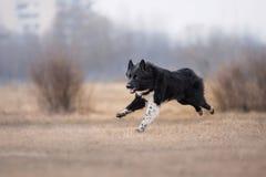 Hond die en in het park lopen spelen royalty-vrije stock foto's