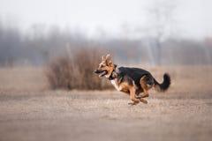 Hond die en in het park lopen spelen stock afbeelding