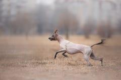 Hond die en in het park lopen spelen stock afbeeldingen