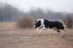 Hond die en in het park lopen spelen royalty-vrije stock afbeelding