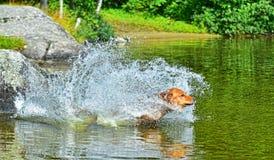 Hond die en water HDR tegenkomen springen Royalty-vrije Stock Fotografie