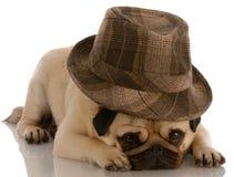 Hond die fedora draagt stock afbeelding