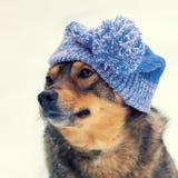 Hond die gebreide hoed dragen Stock Foto