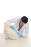 Hond die geneeskunde of inenting ontvangt Stock Afbeeldingen