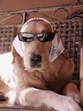 Hond die glazen dragen Royalty-vrije Stock Foto's