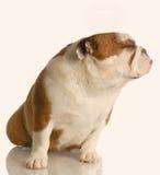 Hond die grappig gezicht maakt Royalty-vrije Stock Foto