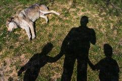 Hond die in gras leggen Stock Afbeeldingen