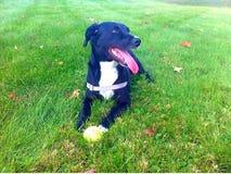 Hond die in gras leggen Royalty-vrije Stock Foto's