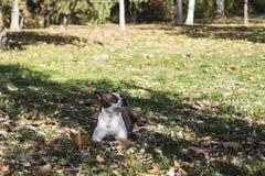 Hond die in gras ligt royalty-vrije stock afbeeldingen