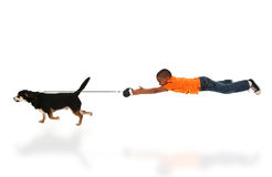 Hond die het Gelukkige Knappe Zwarte Kind van de Jongen voor Gang neemt Stock Afbeeldingen
