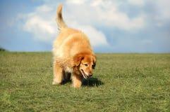 Hond die in het Park loopt royalty-vrije stock foto's