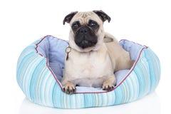 Hond die in hondbed liggen Royalty-vrije Stock Foto's