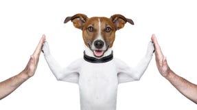 Hond hoge vijf Royalty-vrije Stock Fotografie