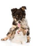 Hond die kat koesteren Op witte achtergrond Royalty-vrije Stock Foto's