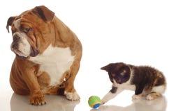 Hond die kat negeert Royalty-vrije Stock Foto's