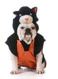 Hond die kattenkostuum dragen stock foto